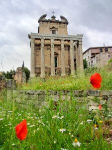 Temple Ruins in Roman Forum